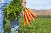 Course on Establishing and strengthening farmer organizations