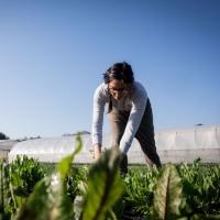 Bellina Alimentari's Meet the Farmer Dinner