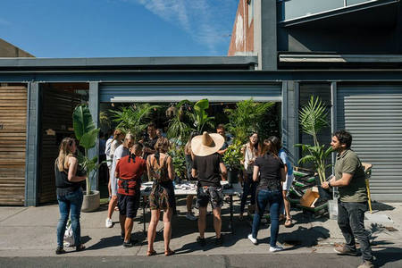 Indoor Plant Warehouse Sale- Jungle Hottest 100, Melbourne, Victoria, Australia