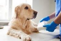 Veterinary Pharmacy Law: 2018 New Regulatory Update & Changes