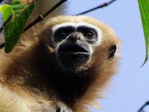 West Siang Wildlife Tour, West Siang, Arunachal Pradesh, India