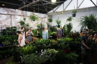 Rumble in the Jungle- Indoor Plant Party- Sydney
