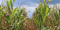 Causes and Minimization of Post-Harvest Losses Course