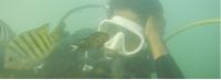 Scuba Diving Tour to Tarkarli