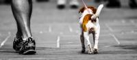 SPCA K9-3K Dog Walk & Woofstock