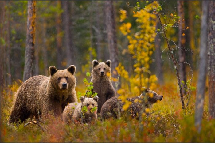 wildlife photography expo