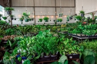Huge Indoor Plant Warehouse Sale- Colour Palooza- Sydney