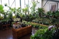 Huge Indoor Plant Warehouse Sale - Tropicana Party - Melbourne