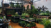 Huge Indoor Plant Warehouse- Winter Snow Party - Melbourne