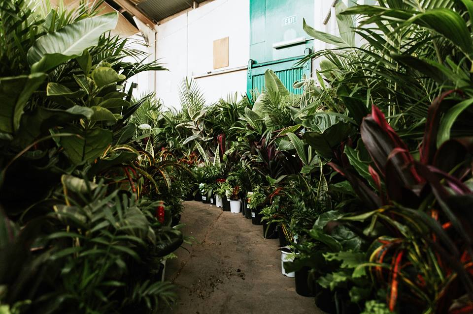 Huge Indoor Plant Warehouse Sale - Foliage Fiesta - Adelaide, Metropolitan Adelaide, South Australia, Australia