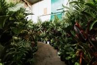 Huge Indoor Plant Warehouse Sale - Foliage Fiesta - Adelaide
