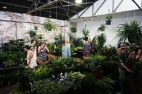 Huge Indoor Plant Warehouse Sale - Winter Wonderland- Sydney
