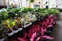 Huge Indoor Plant Warehouse Sale - Springtime Jungle - Adelaide