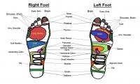Musculoskeletal Ear Hand Foot Reflexology
