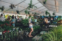 Huge Indoor Plant Warehouse Sale - Rumble in the Jungle-Brisbane