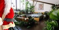 Huge Indoor Plant Warehouse Sale - The Last Hoorah - Melbourne