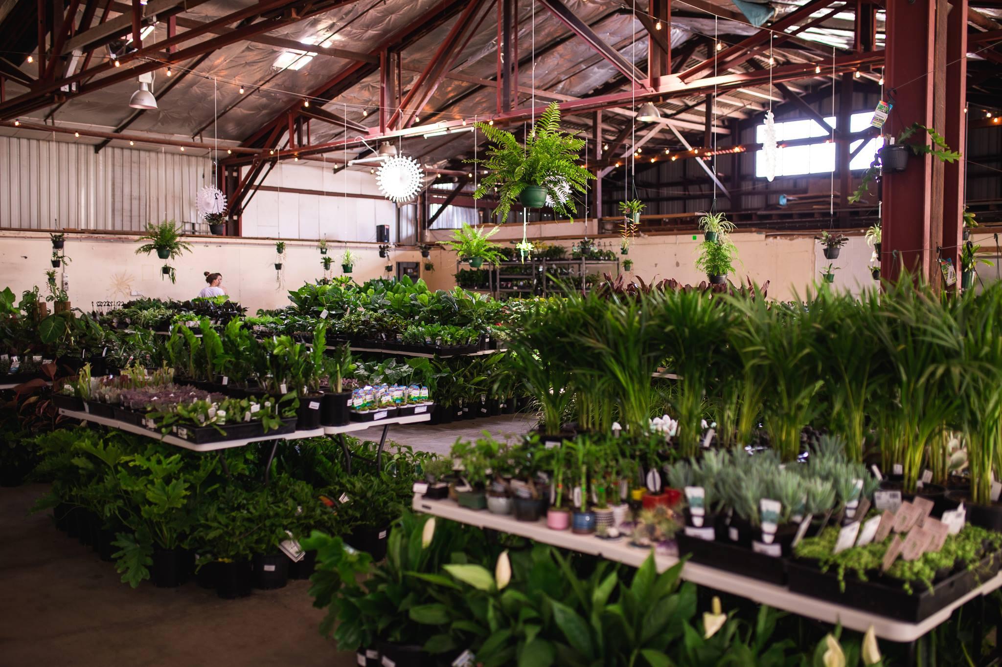 Huge Indoor Plant Warehouse Sale - Jungle Plant Party - Brisbane, Central Queensland, Queensland, Australia