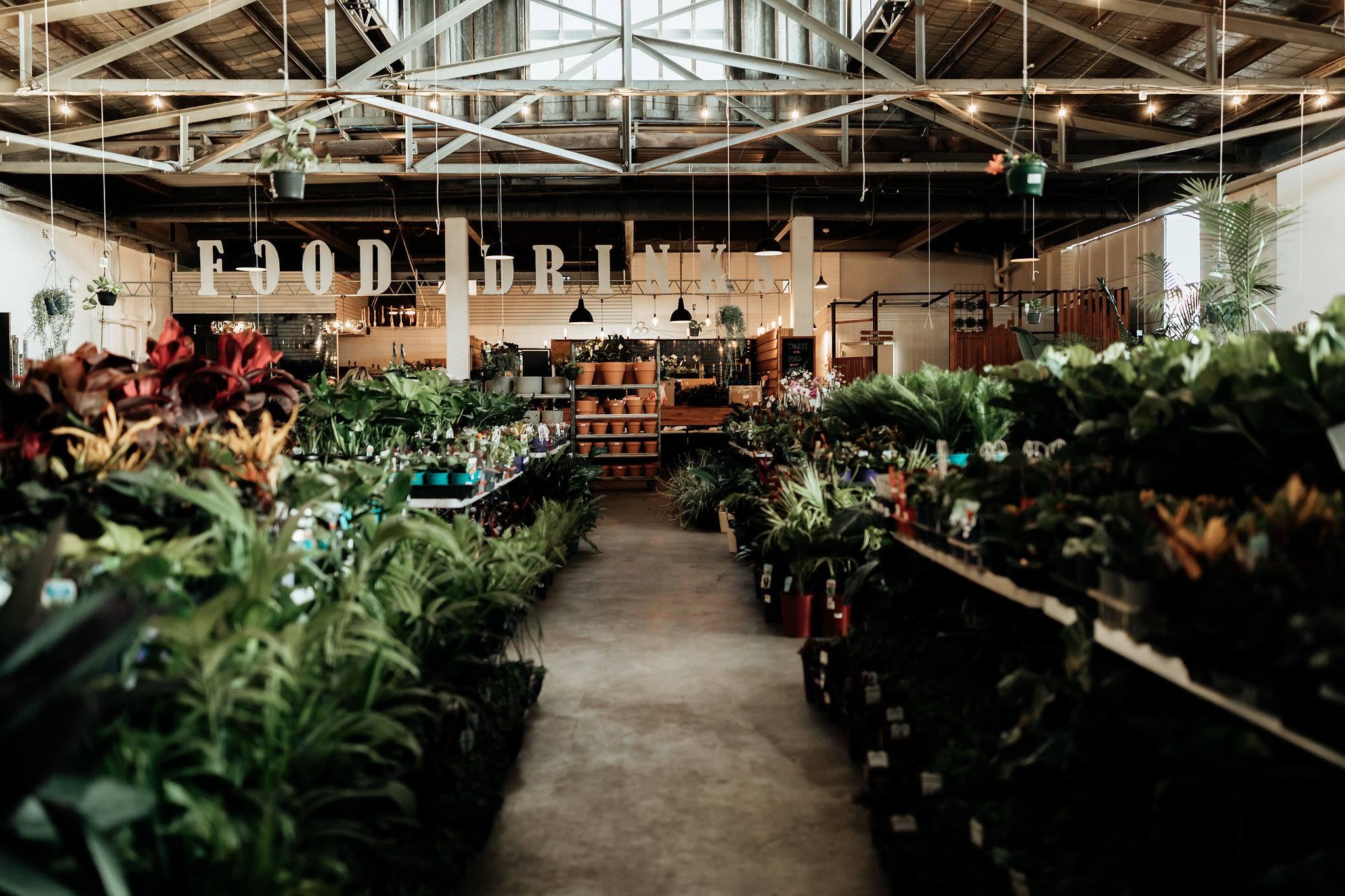 Huge Indoor Plant Warehouse Sale- Summertime Madness - Perth, Perth, Western Australia, Australia