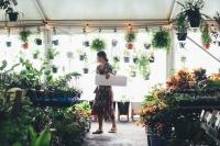 Huge Indoor Plant Warehouse Sale - Summertime Madness- Adelaide