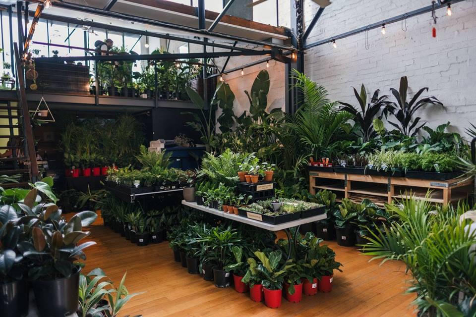 Brisbane - Huge Indoor Plant Warehouse Sale - Tropicana Party, 11A / 25 Michlin Street, Moorooka,Queensland,Australia
