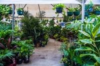 Melbourne - Variegated Plant Party En Blanc
