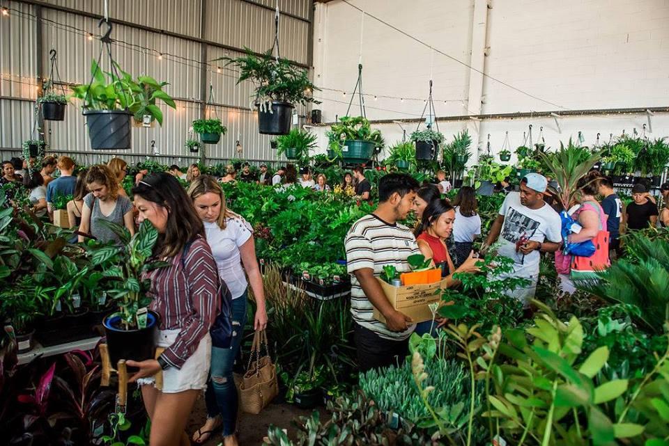 Adelaide - Rare Plant Party En Blanc, Central, South Australia, Australia