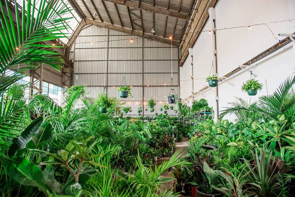 Canberra - Huge Indoor Plant Warehouse Sale-Rumble in the Jungle, Canberra, Australian Capital Territor, Australia