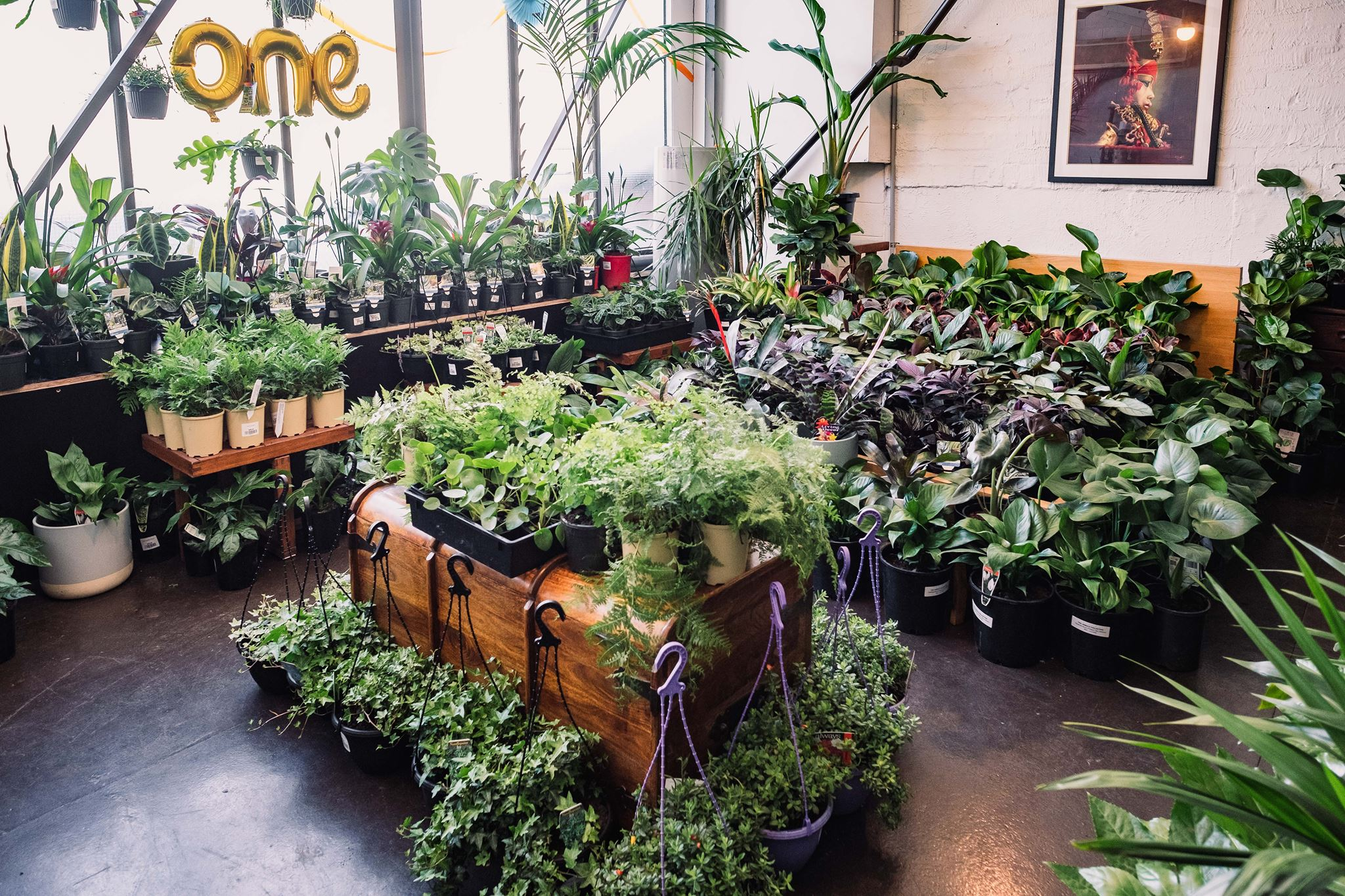 Melbourne - Huge Indoor Plant Warehouse Sale- Pet Friendly Focus, Melbourne, Victoria, Australia