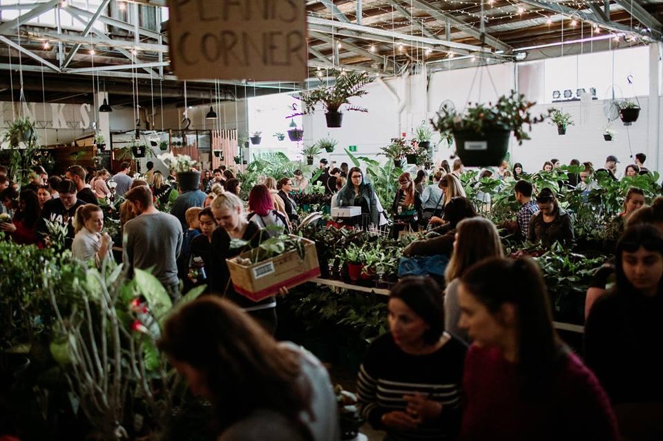 Sydney - Huge Indoor Plant Warehouse Sale - Pet Friendly Focus, Sydney, New South Wales, Australia