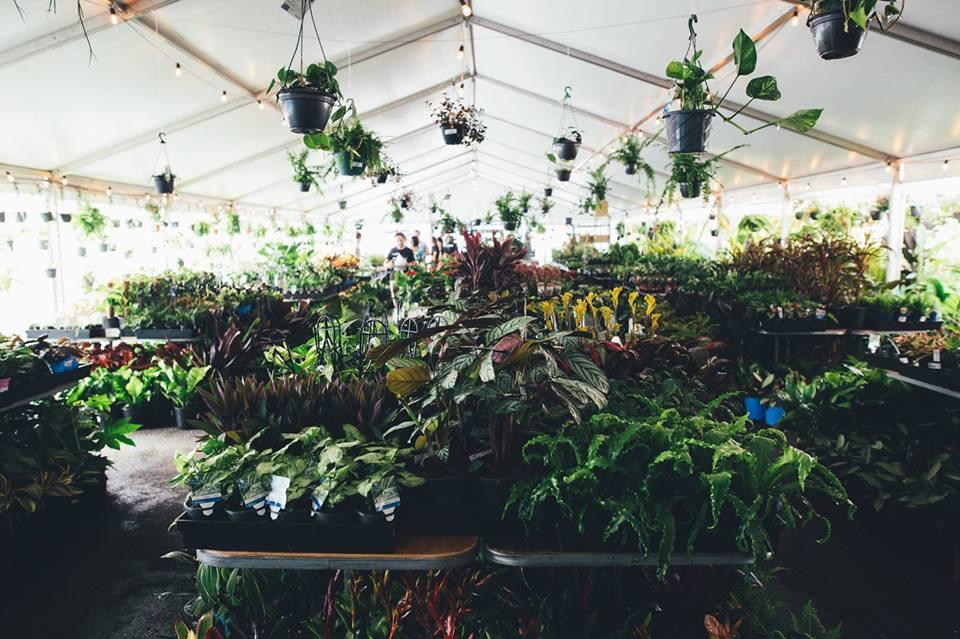 Brisbane - Huge Indoor Plant Warehouse Sale- 70s Jungle Boogie, Brisbane, Queensland, Australia