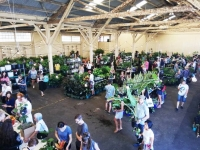 Huge Indoor Plant Warehouse Sale- Rumble in the Jungle - PERTH