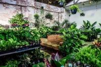 Sydney - Huge Indoor Plant Sale - Mother's Day Special