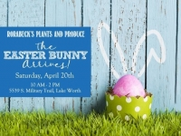 Visit with the Easter Bunny / Free Picture