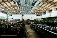 Perth - Huge Indoor Plant Warehouse Sale- Winter Wonderland