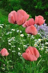Newfields Garden Club PLANT SALE