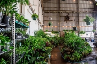 SYDNEY - Huge Indoor Plant Warehouse Sale - Low Light Party!