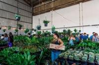 Brisbane - Huge Indoor Plant Sale - Rumble in the Jungle
