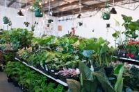 Melbourne - Huge Indoor Plant Sale - Springtime Splendour