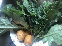 Vegetarian Cooking Series | Vegetarian Basics