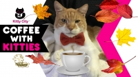 """Kitty City At Wildhorse presents...""""Coffee With Kitties"""""""