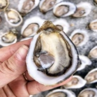 Hanson of Sonoma Organic Vodka and Hog Island Oysters Oct. 5th and 6th