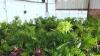 Gold Coast - Huge Indoor Plant Warehouse Sale