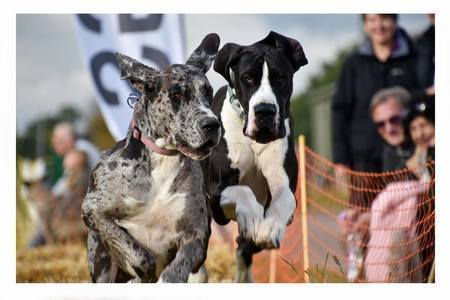 East Anglian Festivals of Dogs, Thetford, Norfolk, United Kingdom