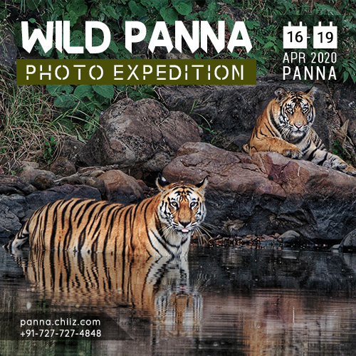 Panna Wildlife Photography Tour, Panna, Madhya Pradesh, India