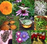 Roberta's Herbs 2020 Herbal Apprenticeship Program