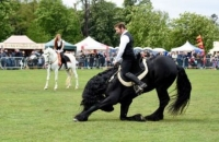 The East of England Country Show