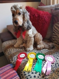 The Essex Festivals of Dogs