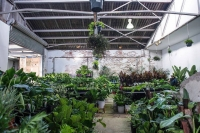 Perth - Springtime Splendour - Virtual Indoor Plant Sale