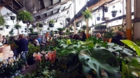Melbourne - Tropicana Party - Virtual Indoor Plant Sale