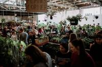 Perth - Huge Indoor Plant Sale - Super Dooper Sale